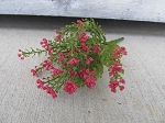 Primitive Country Rustic Fall Red Astilbe Bush